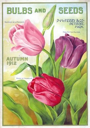 DMFerryCo_BulbsandSeeds_1904